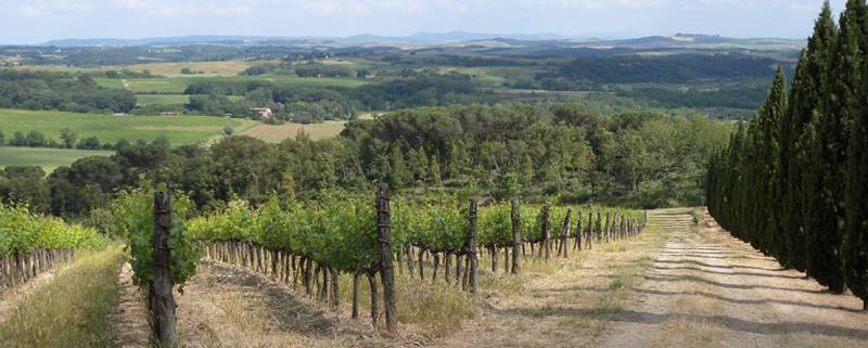 vineyards3b