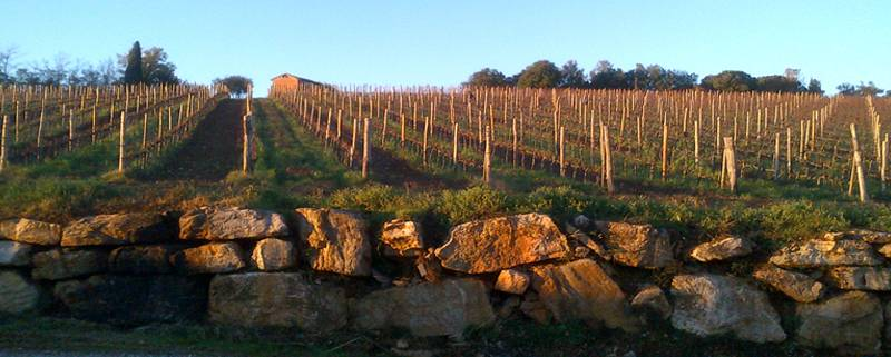 vineyards4b